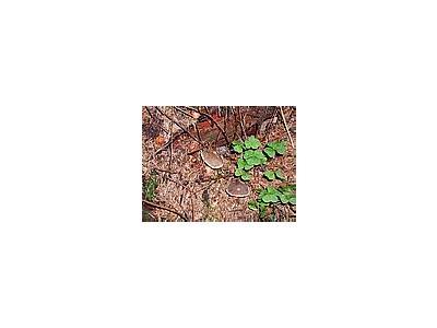 Photo Small Mushrooms Landscape