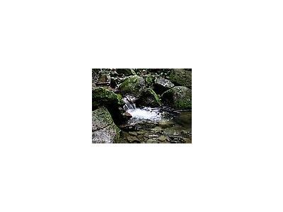 Photo Small Stream 11 Landscape
