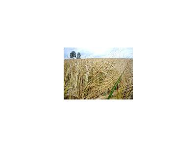 Photo Small Rye Landscape