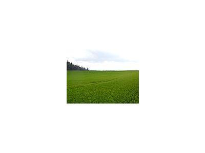 Photo Small Field 26 Landscape