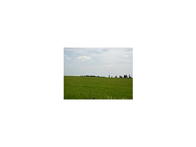 Photo Small Field 47 Landscape