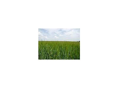 Photo Small Field 51 Landscape