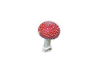 Photo Small Amanita Muscaria Object
