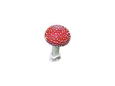 Photo Small Amanita Muscaria Object