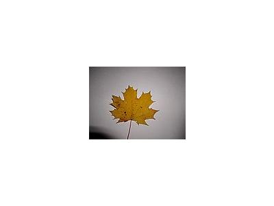 Photo Small Leaf 2 Object