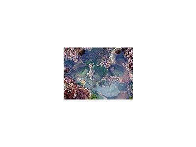 Photo Small Tide Pools 4 Ocean