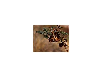 Photo Small Thorny Seed Pod Plant