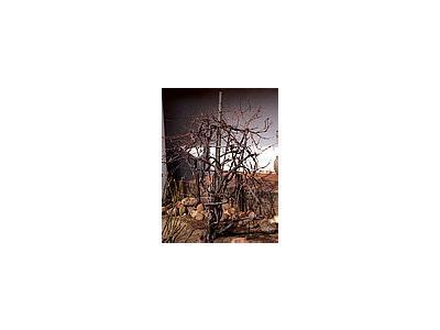 Photo Small Vines And Trellis Plant