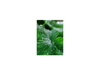 Photo Small Water Droplets Plant