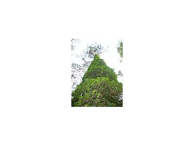 Photo Small Ivy Plant
