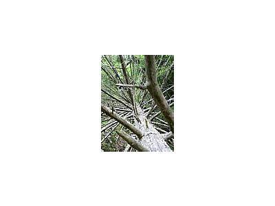 Photo Small Fallen Branshy Tree Plant