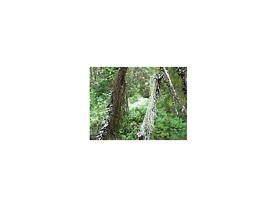 Photo Small Lichens Plant