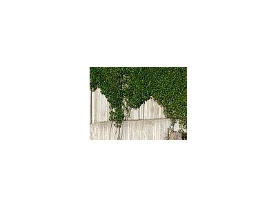 Photo Small Plants Climbing Concrete Wall Plant