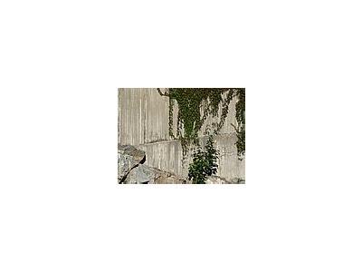 Photo Small Plants Climbing Concrete Wall 2 Plant