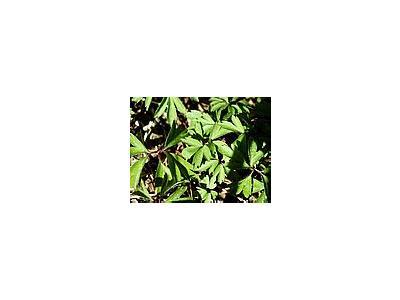 Photo Small Plant 4 Plant