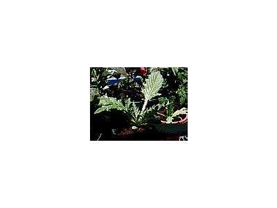 Photo Small Artichoke Plant