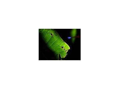 Photo Small Banana Leaf 2 Plant