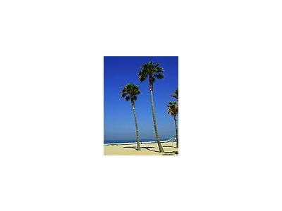 Photo Small Beach Palm Trees Plant