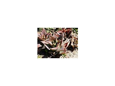 Photo Small Cactus Plant