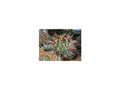 Photo Small Cactus 2 Plant
