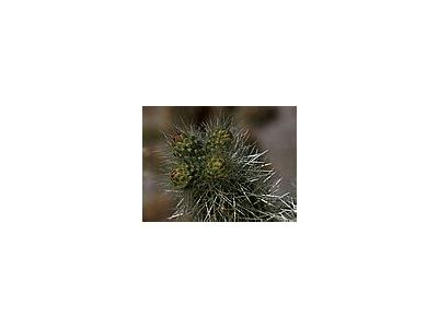 Photo Small Cactus Needles Plant