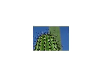 Photo Small Cactus Thorns Plant