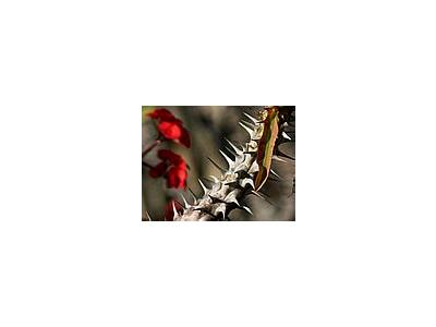 Photo Small Cactus Thorns 2 Plant
