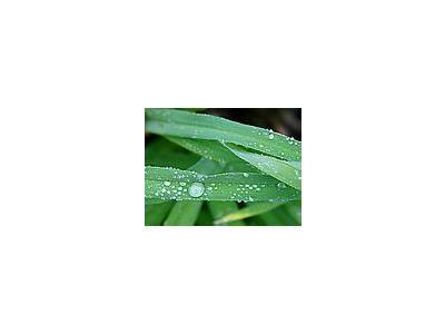 Photo Small Drops Plant