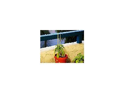 Photo Small Flowerpot Plant Plant