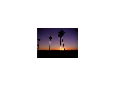 Photo Small Palm Trees And Sunrise Plant