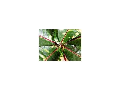 Photo Small Plant Plant