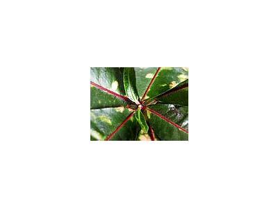 Photo Small Plant 2 Plant