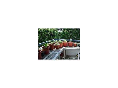 Photo Small Spices Plant