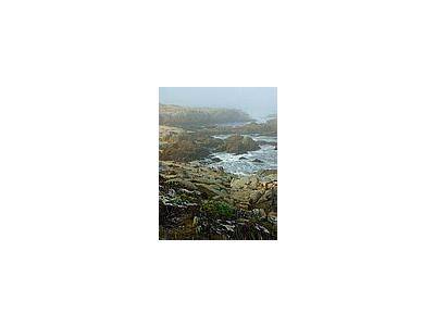 Photo Small Monterey Fog Travel