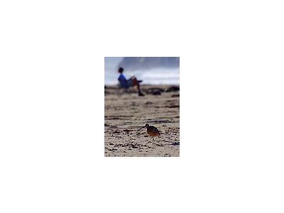 Photo Small Morro Beach Travel