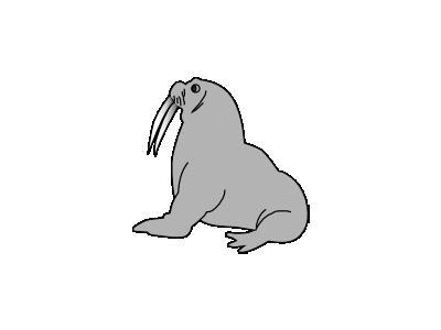 Seal Sek  Animal