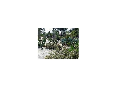 Photo Small Cactus Garden Travel