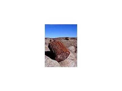 Photo Small Petrified Wood 2 Travel