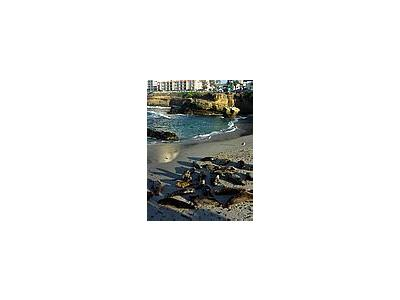 Photo Small La Jolla Cove Travel