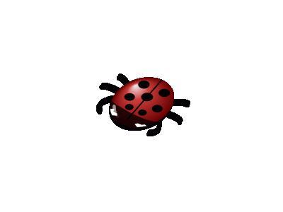 Ladybug 02 Animal
