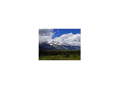 Photo Small Grand Teton Flowers Travel