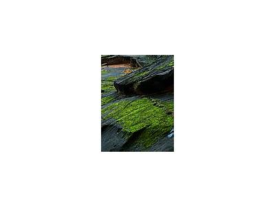 Photo Small Zion Canyon Moss Travel