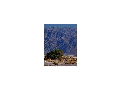 Photo Small Desert Travel