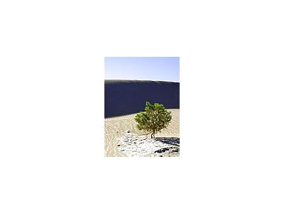 Photo Small Sand Dunes 3 Travel