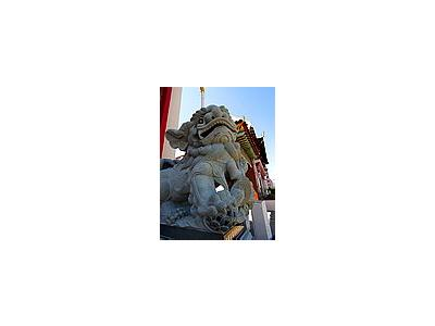 Photo Small Chinese Foo Dogs Travel