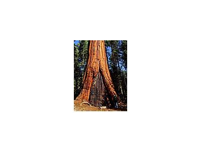 Photo Small Sequoia 3 Travel