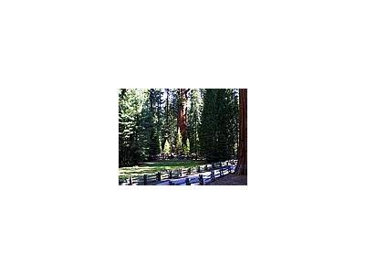 Photo Small Sequoia 5 Travel