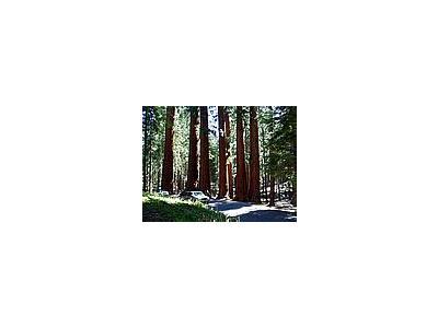 Photo Small Sequoia Park 4 Travel