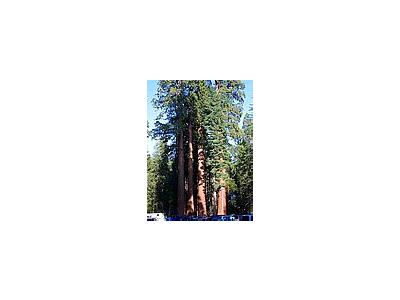 Photo Small Sequoias Travel