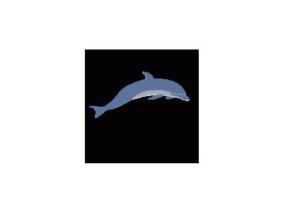 Dolphin Enrique Meza C 02 Animal